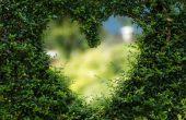 groen hart